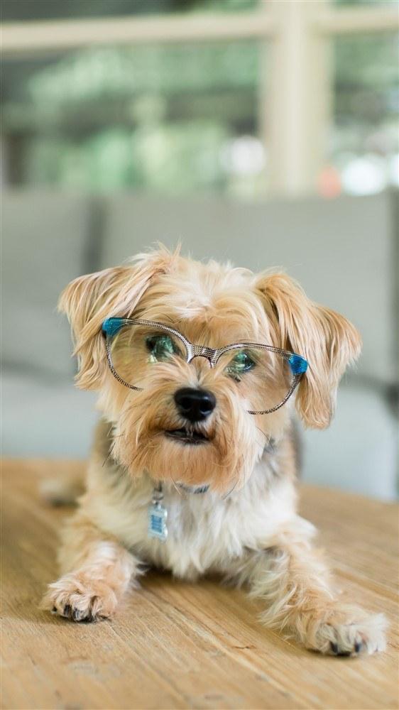 post 12 pets.jpg  (Moderate)